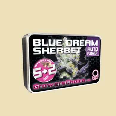 Blue Dream Sherbet (Autoflower)