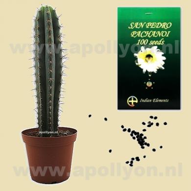 Cactus Zaden San Pedro