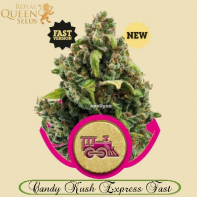 Candy Kush Express Fast Version
