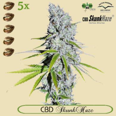 CBD SkunkHaze 5x