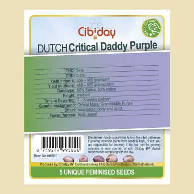 Dutch Critical Granddaddy Purple
