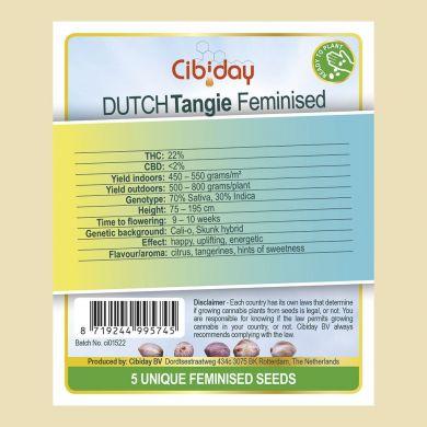 Dutch Tangie
