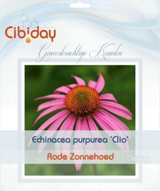 Echinacea Purpurea Clio
