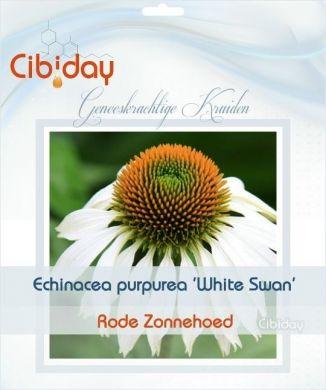 Echinacea Purpurea White Swan