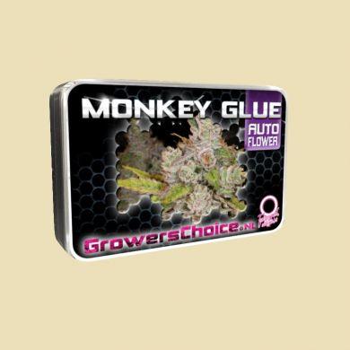 Monkey Glue (Autoflower)