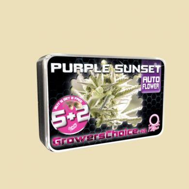 Purple Sunset (Autoflower)