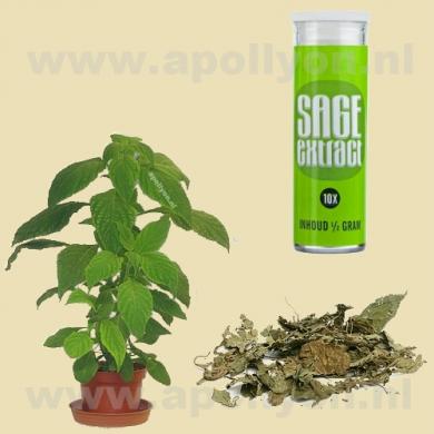 Salvia  10x 0,5gr