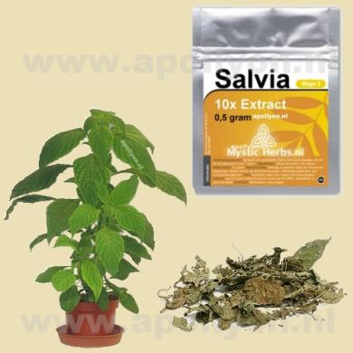 Salvia Extract 10x  0,5gr