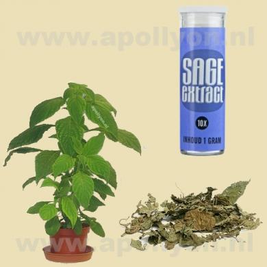 Salvia Extract 10x  1gr