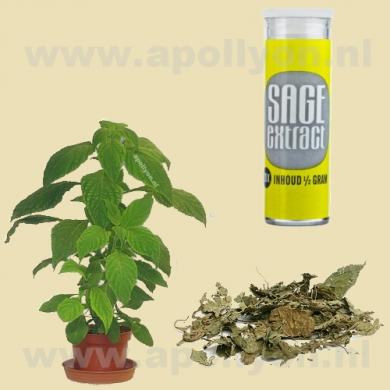 Salvia Extract 20x  0,5gr