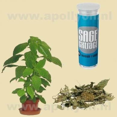 Salvia Extract 20x  1gr