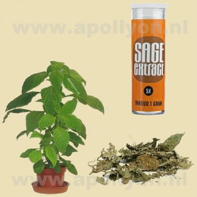 Salvia Extract 5x  1gr