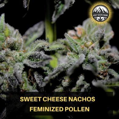 Sweet Cheese Nachos Wietpollen