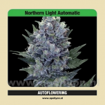 Autoflowering Northern Light Automatic 5 zaden