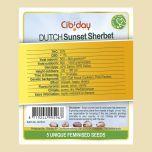 Dutch Sunset Sherbet