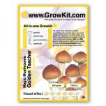 Magic Mushroom Growkit Golden Teacher, All In One