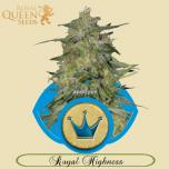 Royal Highness RQS