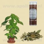 Salvia Extract 40x  0,5gr